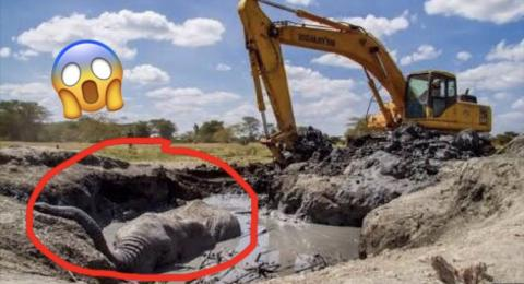 Elephant Trapped In Mud Dramatically Rescued