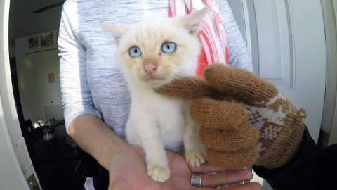 [Watch] Man Resuscitate Frozen Kitten