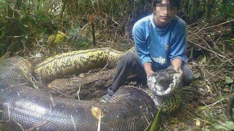 5 Biggest Snakes In The World
