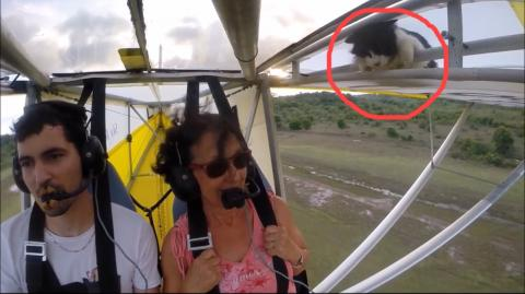Reminder: Remove Cat Before Flight