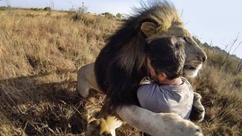 Man Tries To Hug A Wild Lion, And What Happens Next Is...