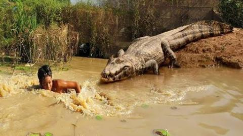 Brave Boy Catches Crocodile While Going Fishing