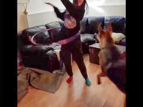 German Shepherd Wants To Hula Hoop