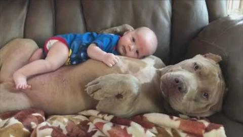 Babies Cuddling With Dogs