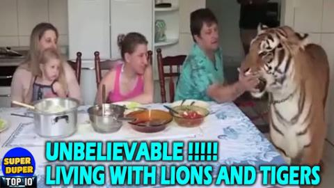 People Living With Tigers And Lions As Pets