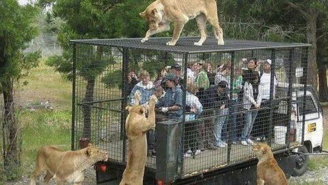 Epic Zoo Fails