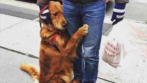 Lovely Dogs Meet Their Owners After Long Time