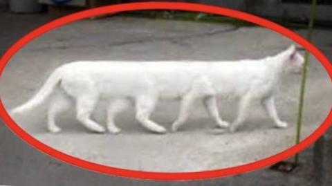 Unbelivable Photos You Won't Believe Actually Exist!