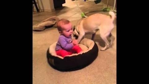 [FUNNY] Dog Doesn't Want The Baby In His Bed!