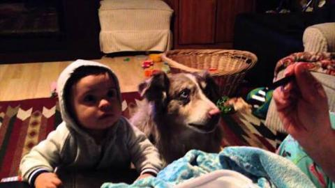 [VIDEO] Dog Shows Baby How to Say 'Mama'