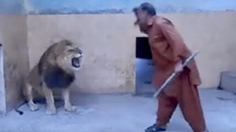 [VIDEO] Stupid Zoo Keeper Attacked By A Lion