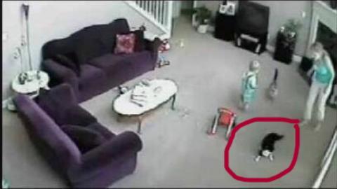 Hero Cat Defends Baby From Babysitter