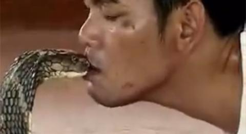 King Cobra Master