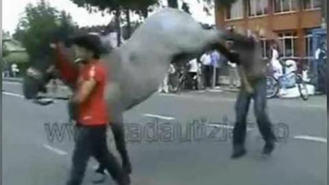 Horse Kicks Guy In The Face