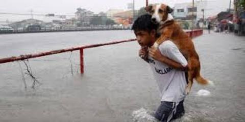 Great People Saving Helpless Animals